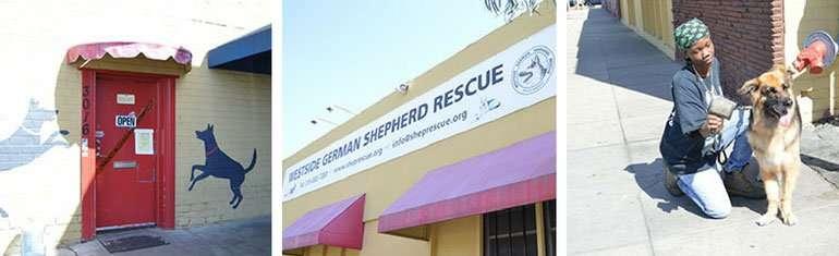 Westside German Shepherd Rescue is a Blessing