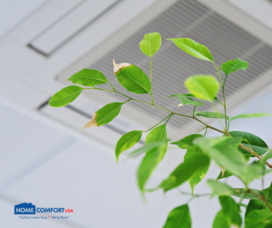 plant next to air conditioner